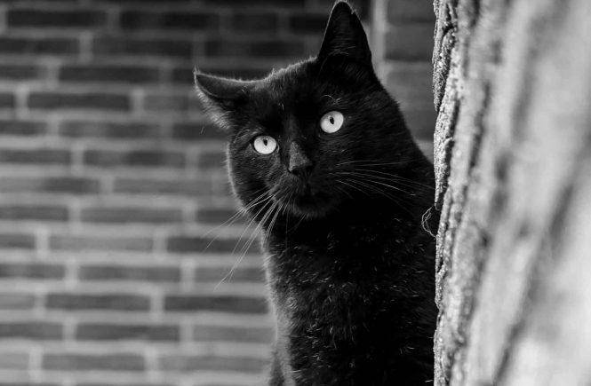 schwarze Katze vor Mauer
