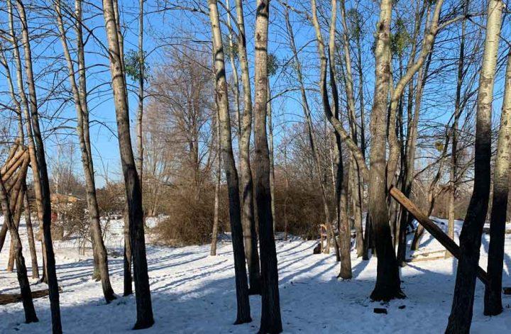 Winterlandschaft mit Bäumen und Schnee